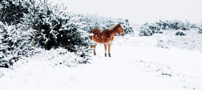 Wieso Sie bei Ärger wie ein Pferd schnauben sollten!