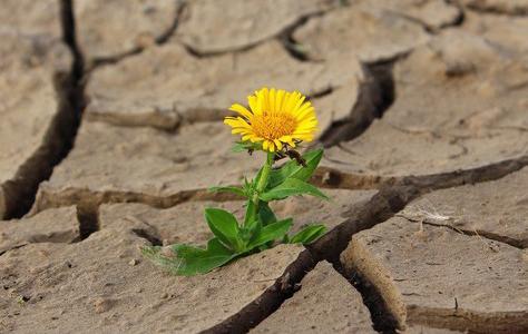 Was genau ist Resilienz?