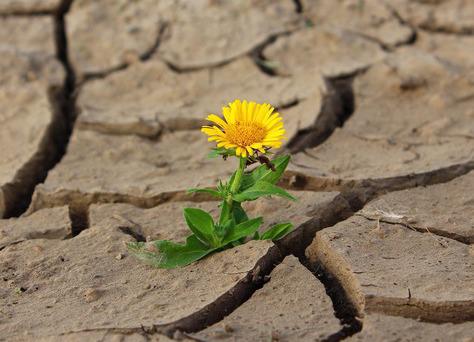 Resilienz − worum geht es da eigentlich?
